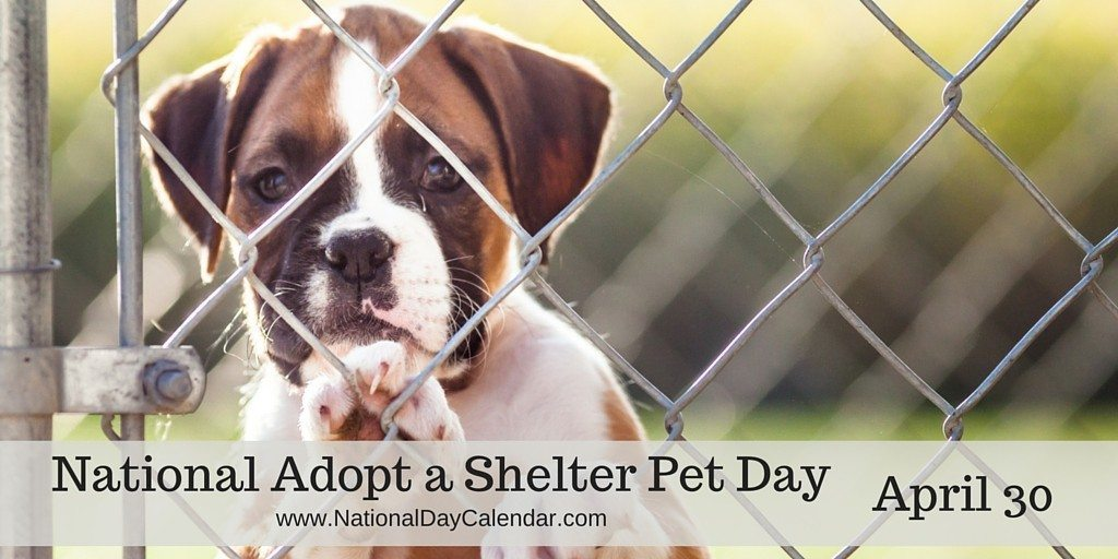 National Adopt a Shelter Pet Day - April 30